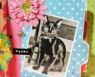 Flowers- Poppy