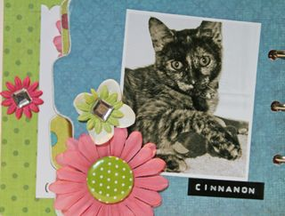 Flowers- Cinnamon